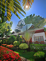 Garden : Banana Fan Sea Resort, 2 Bedrooms, Phuket
