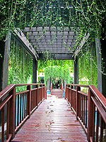 Pathway : Burasari Phuket, Pool Access Room, Phuket