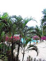 プーケット 5,000円以下のホテル : ドゥアンジット リゾート&スパ(Duangjitt Resort & Spa)の ファミリー スイートルームの設備 View