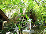 Garden : Milkybay Resort, Couple & Honeymoon, Phuket