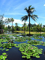 Garden : The Sarojin, Promotion, Phuket