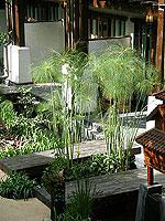 チェンマイ ニマンヘミン通りのホテル : ヤンタラシリ リゾート 「Hotel View」